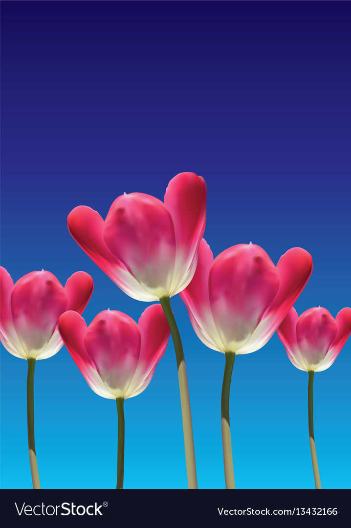 Realistic 3d tulips