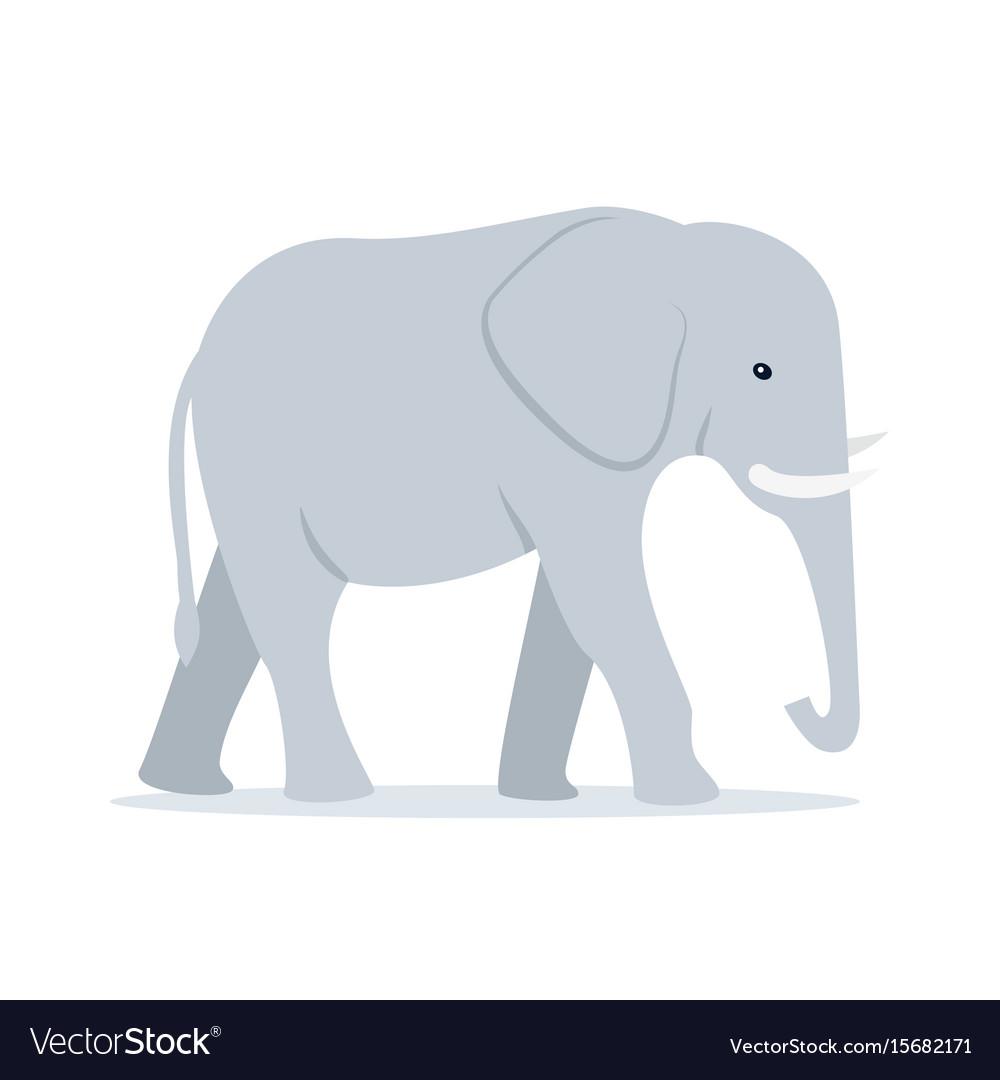Walking adult elephant