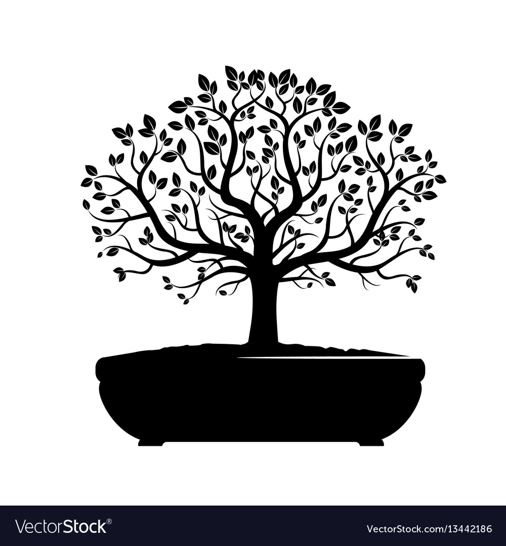 Black bonsai olive tree vector image