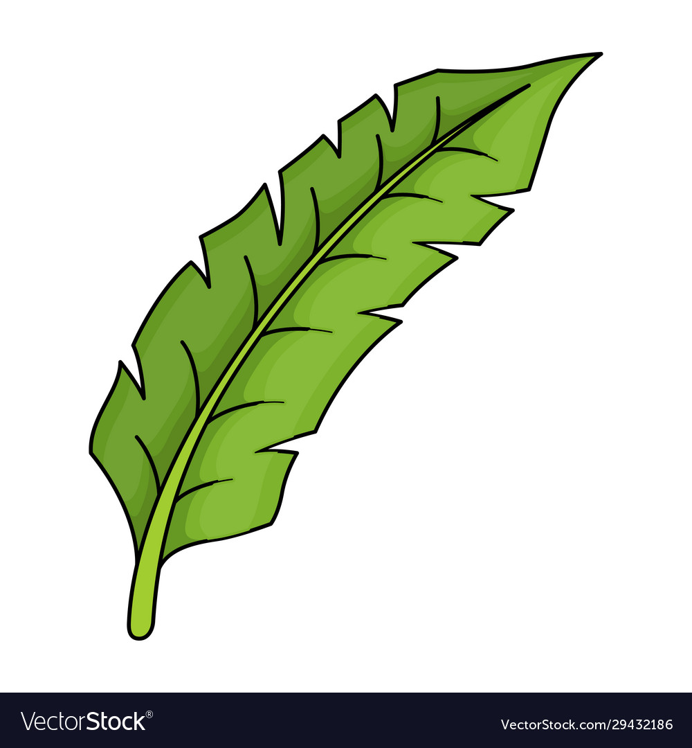 Tropical leaf green icon tree floral design