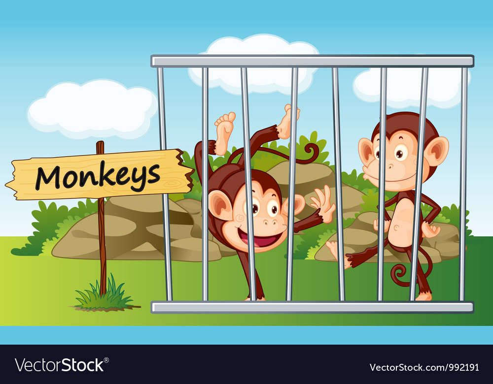 Cartoon Zoo Monkeys Royalty Free Vector Image