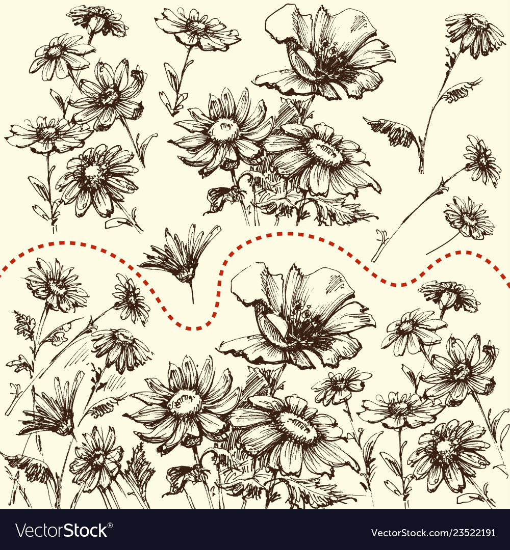 Floral set a collection hand drawn flowers