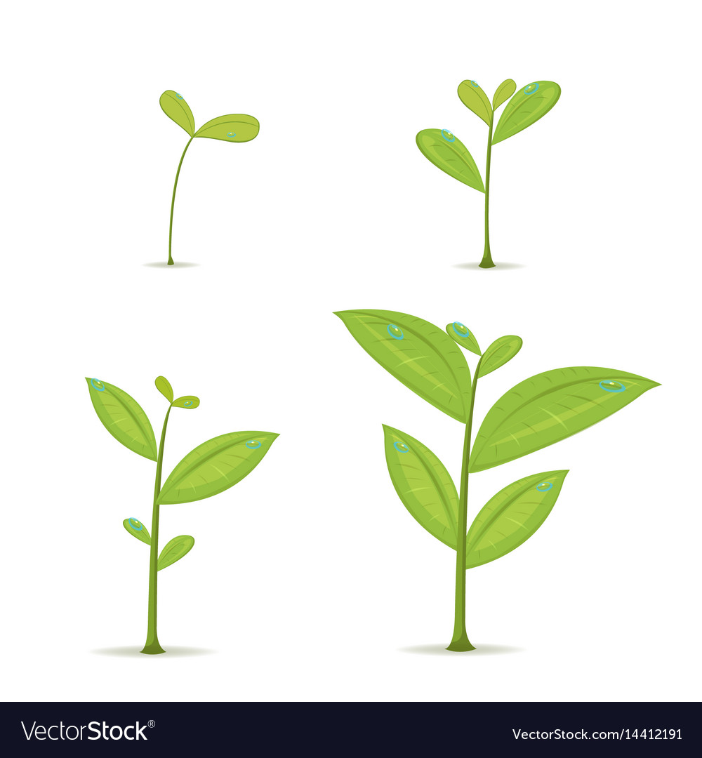 Plant green leaf grow set vector image