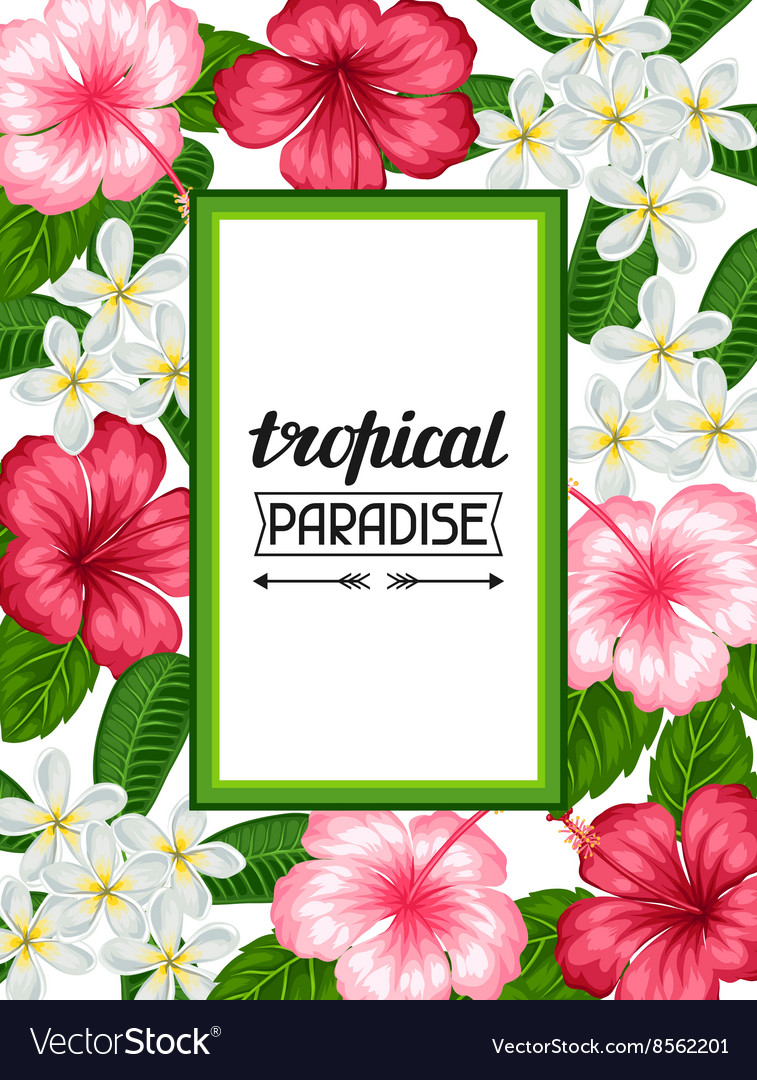 Frame with tropical flowers hibiscus and plumeria