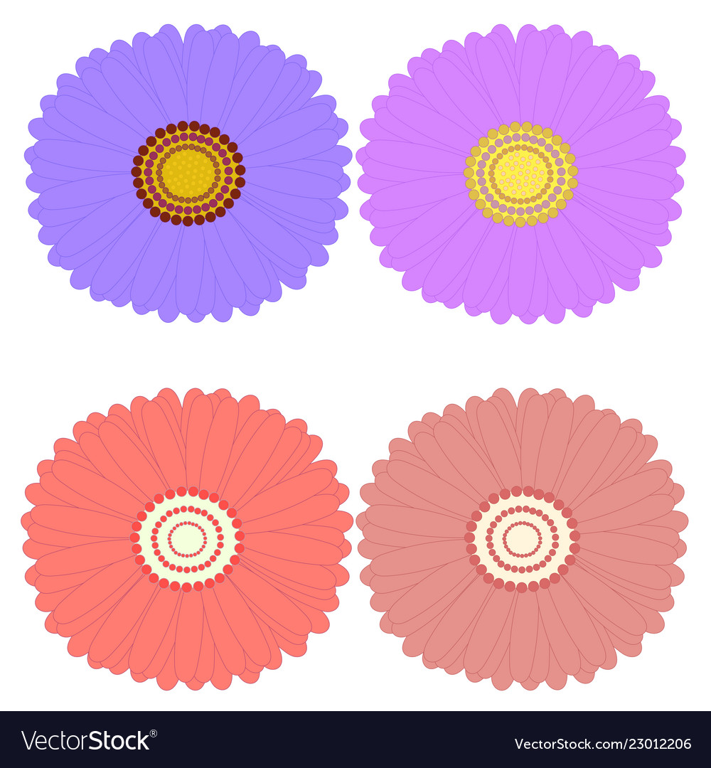 Decorative aster flowers top view design elements