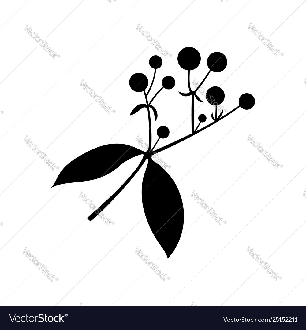Rubia tinctorum common madder or dyers madder