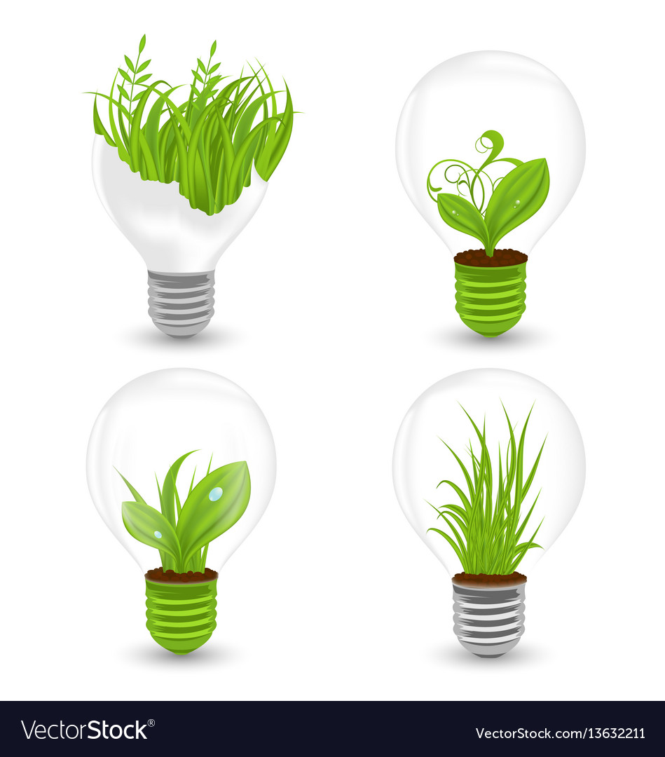 Set of light bulbs with plant and leaves growing vector image