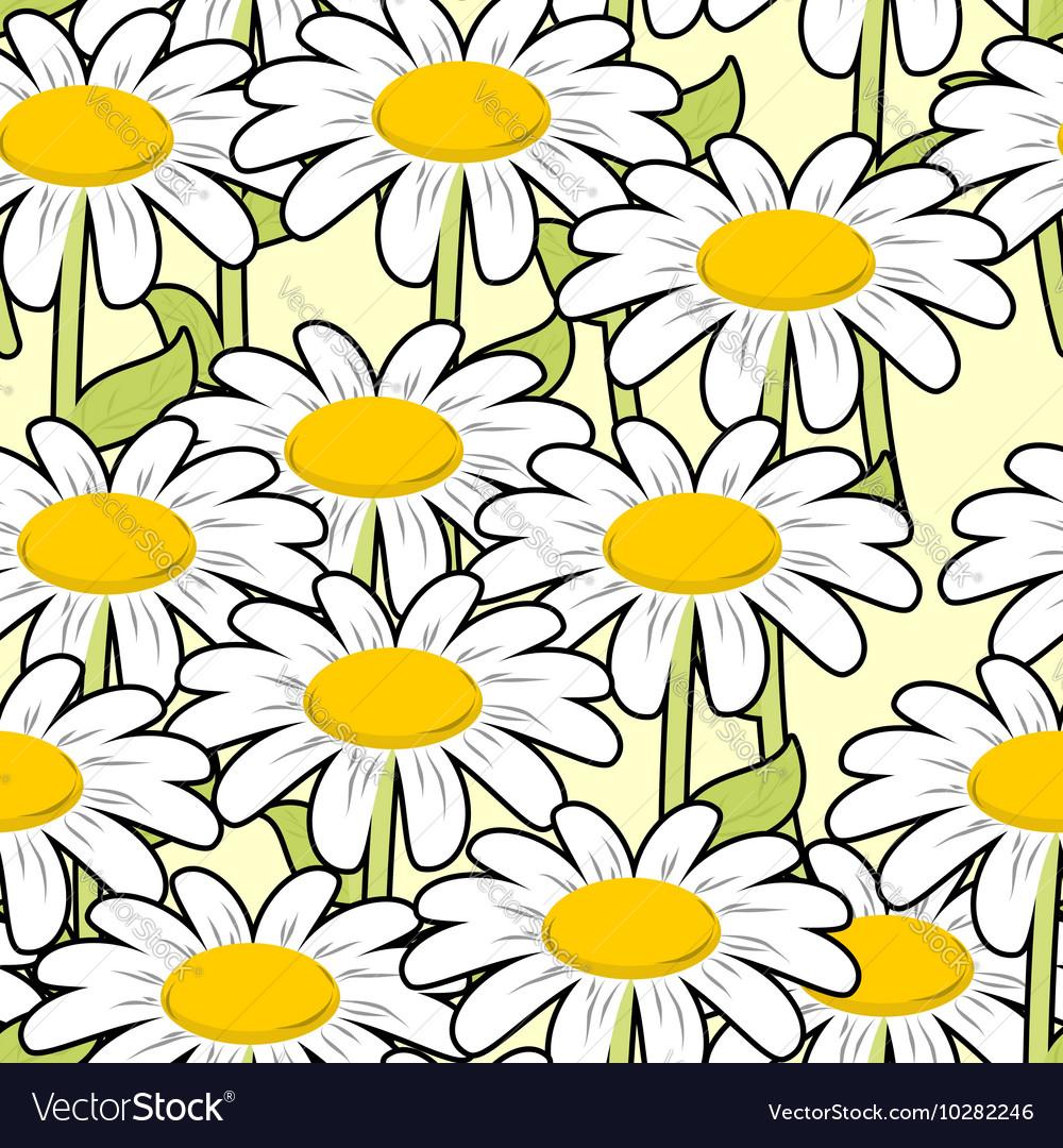 Chamomile seamless pattern Beautiful flowers vector image