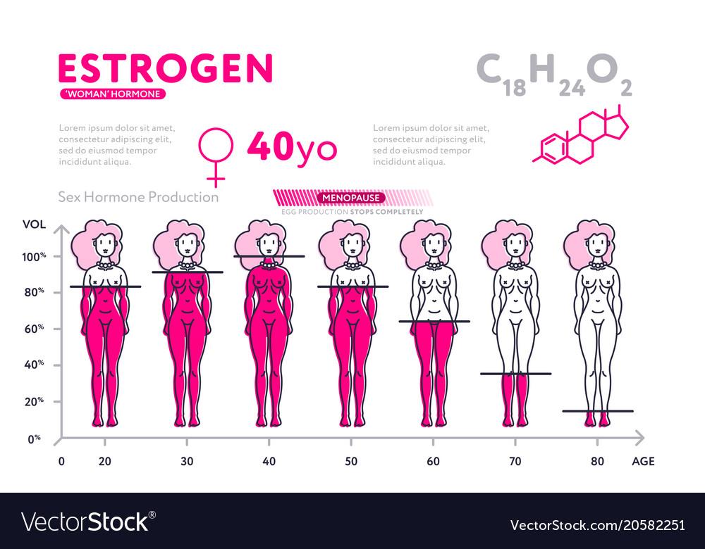 Representation Of Female Hormone During Lifetime Vector Image-7924