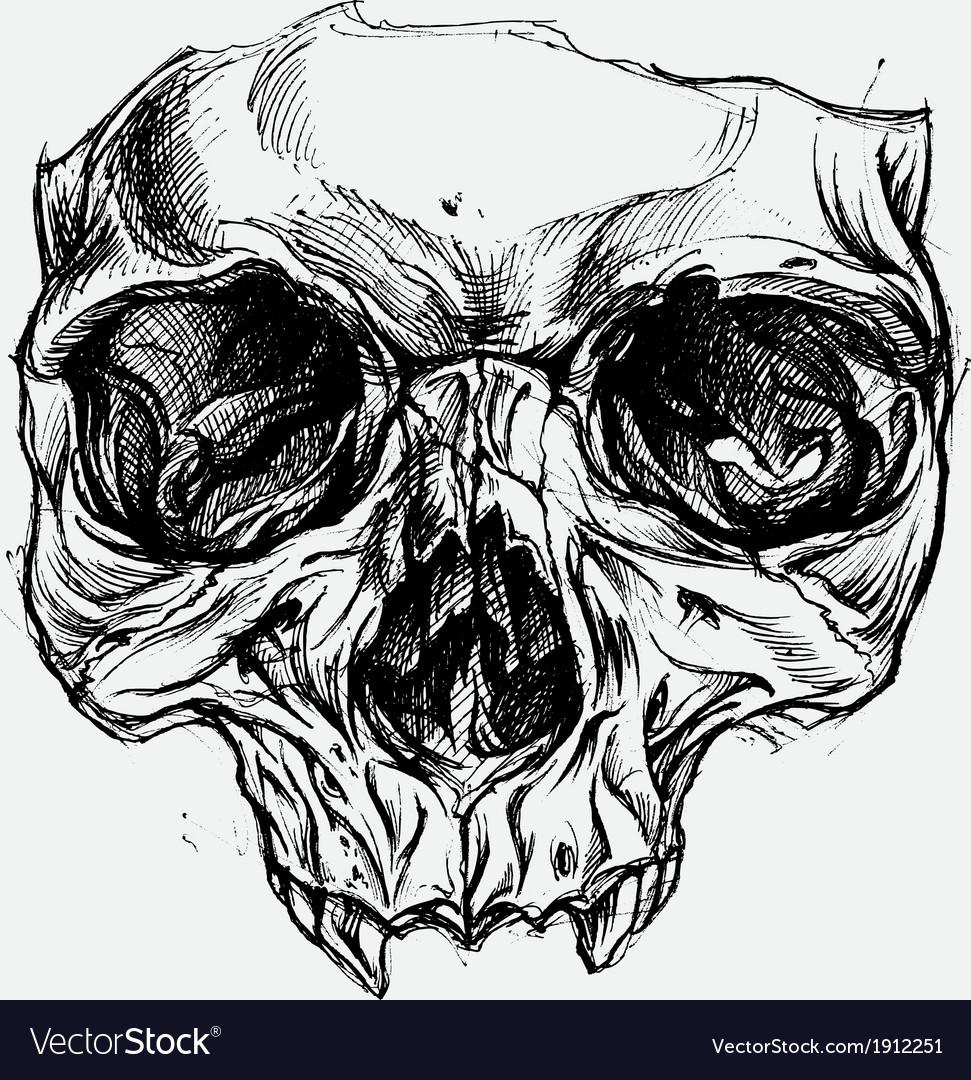 Skull Drawing vector image