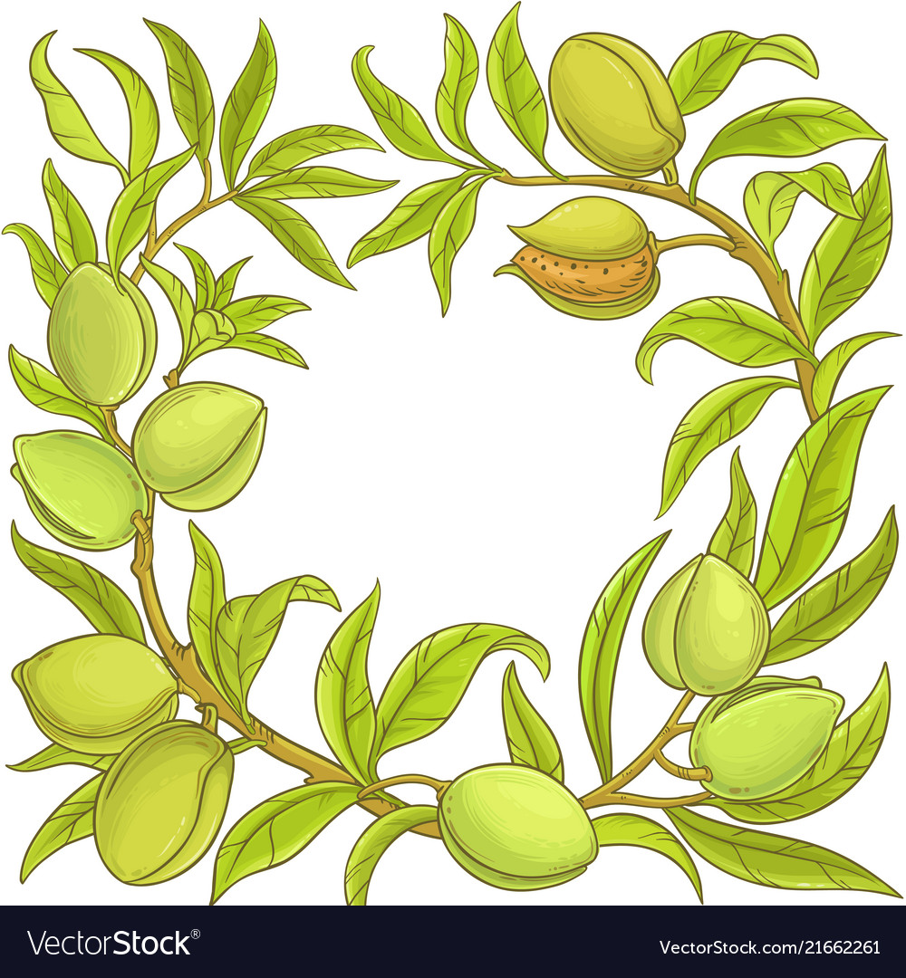 Almond frame