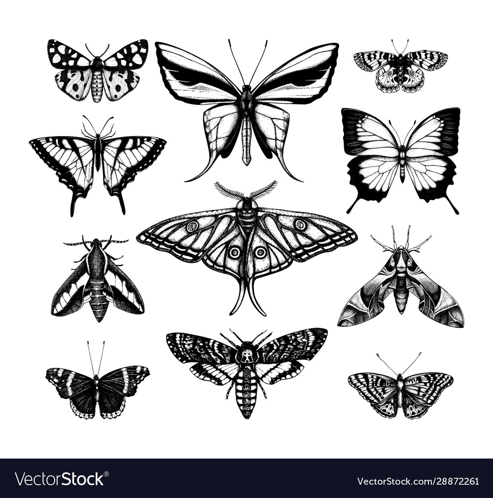 Collection high detailed insects sketches hand