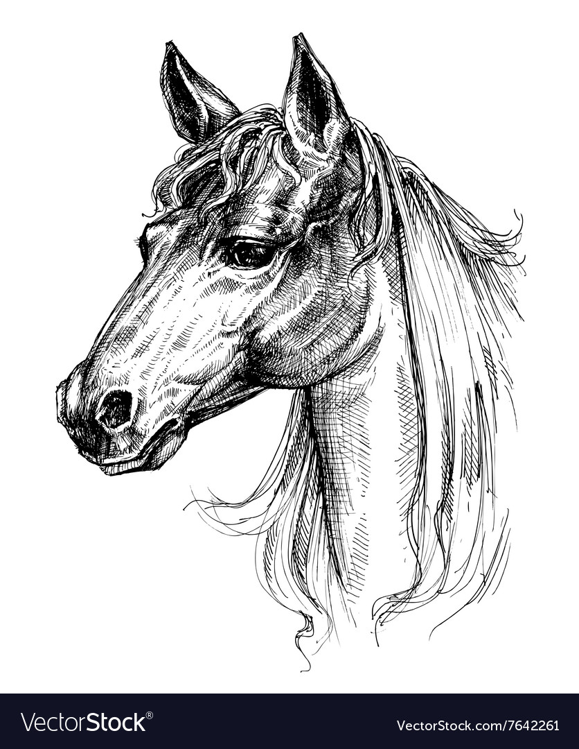 Horse head drawing vector image