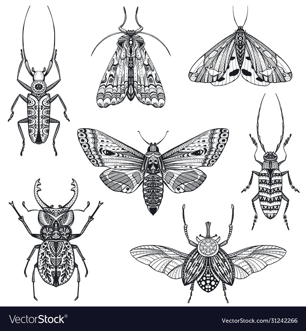 Collection hand drawn insects moth