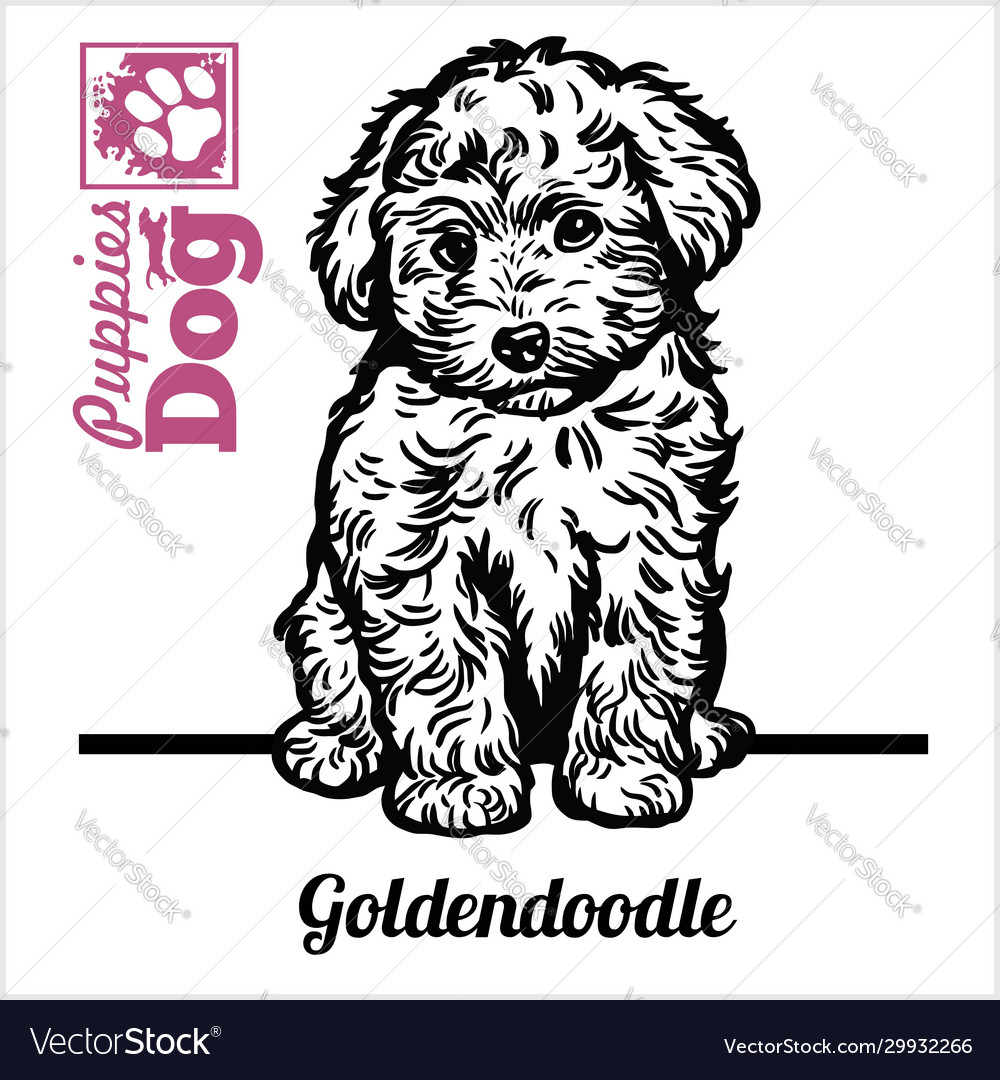 Goldendoodle Puppy Sitting Drawing Hand Royalty Free Vector
