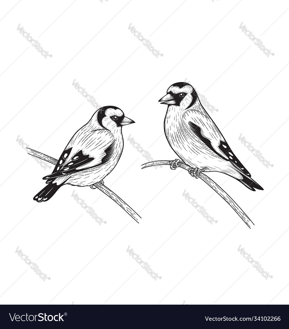 Hand drawn goldfinches sitting on branches