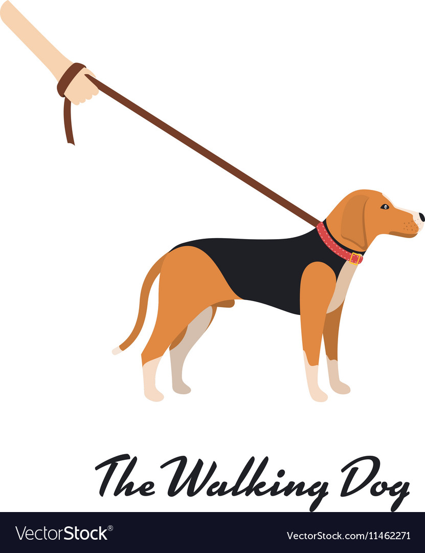 Beagle Dog With A Leash Color Serious Dog Vector Image