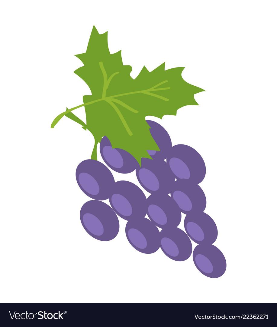 Brunch of lilac grape color