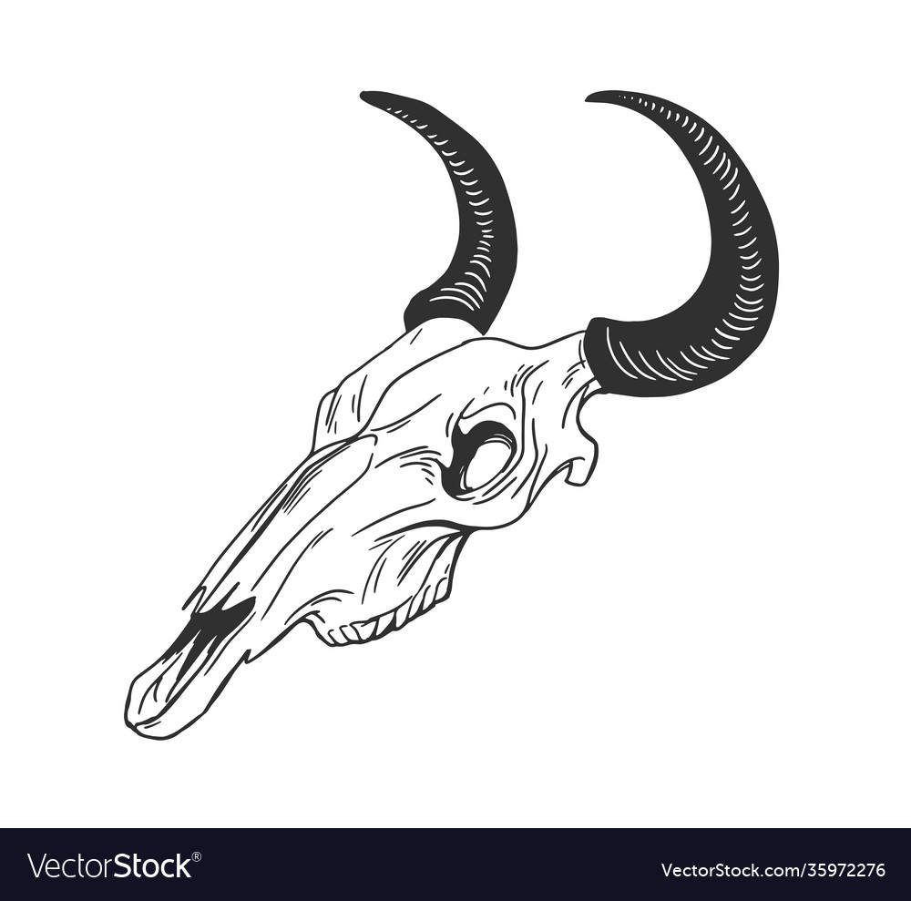 Skull animal with horns for witchcraft and