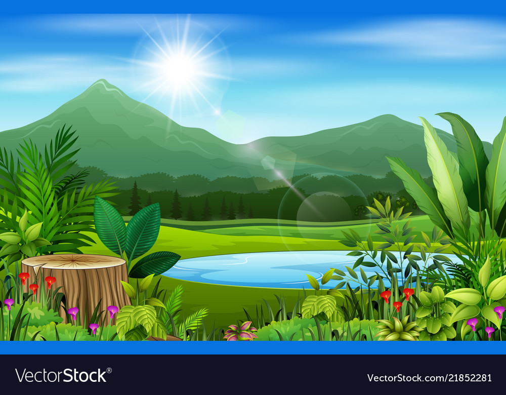 Landscape views of mountains in the forest