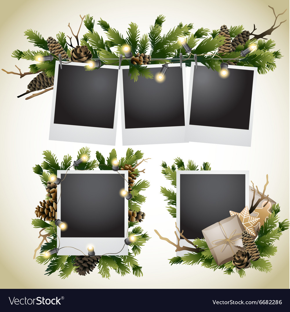 Christmas card with coniferous design vector image