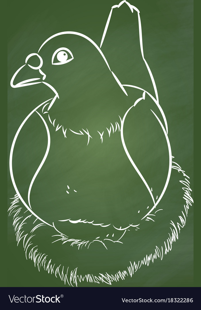 Hand drawing pigeon on green board