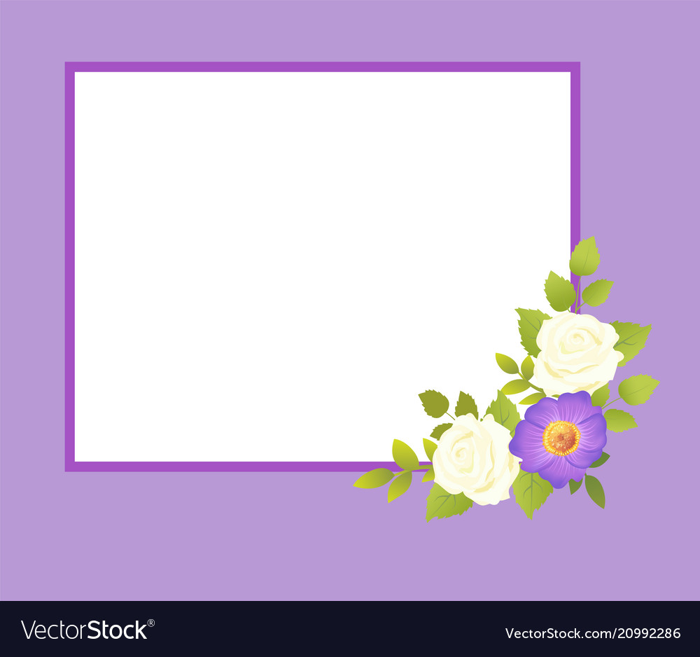 Purple frame with white rose flowers gentle daisy