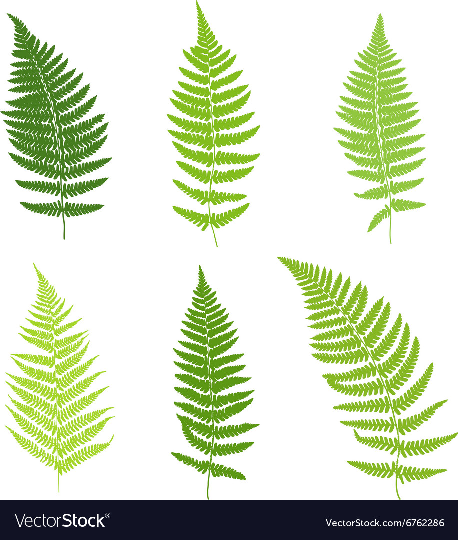 Set of fern frond silhouettes