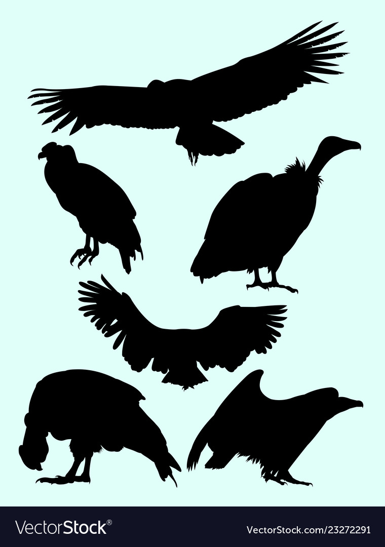 Condor falcon vulture birds animal silhouette