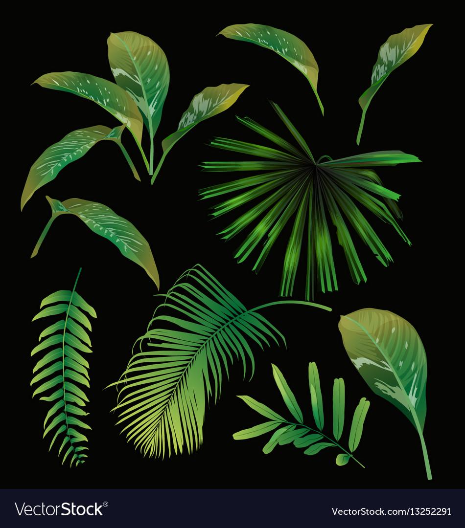 Tropical leaf set