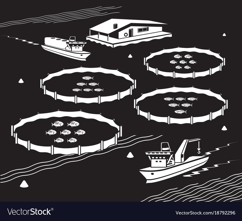 Sea fish farm