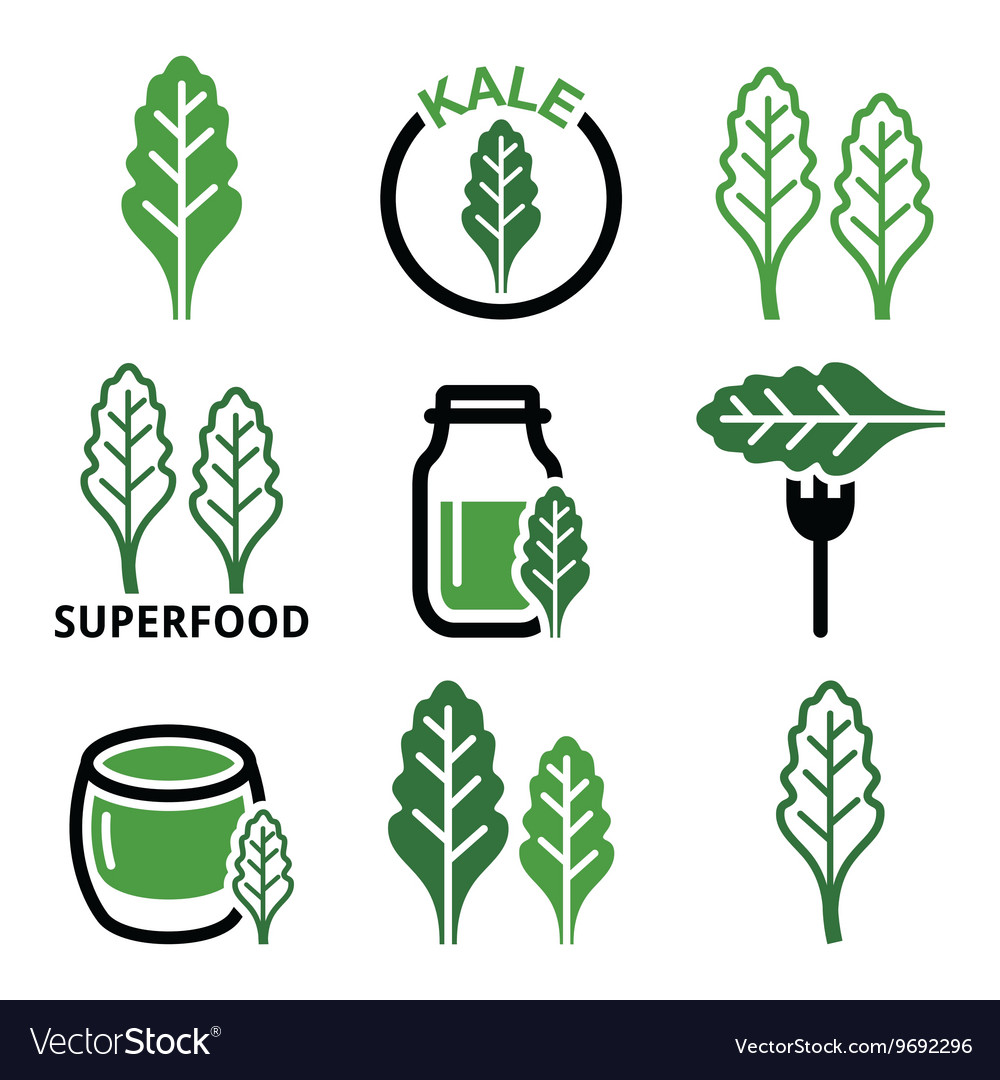 Superfood - kale leaves green icons set