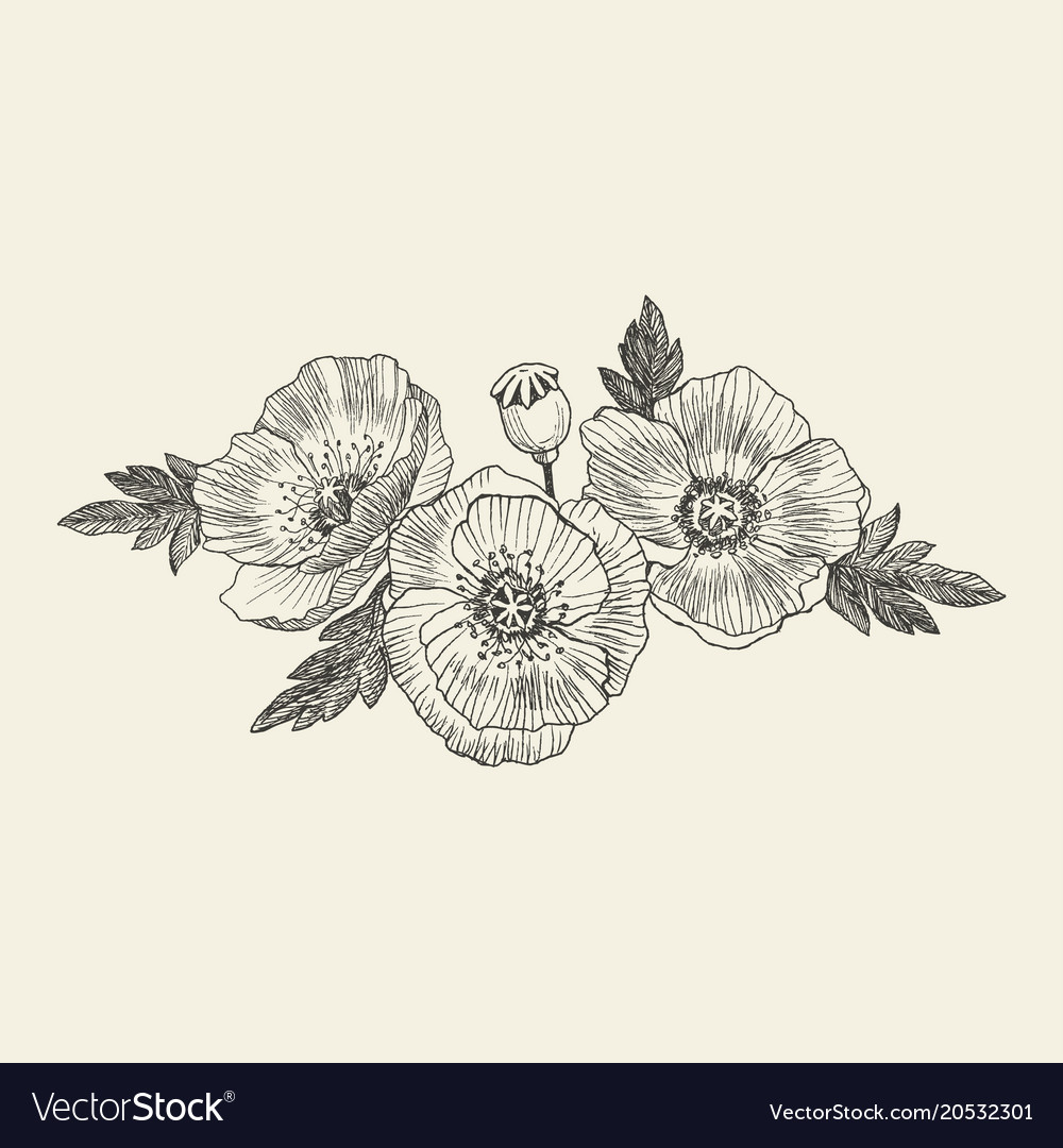 California poppy flowers drawn and sketch with vector image mightylinksfo