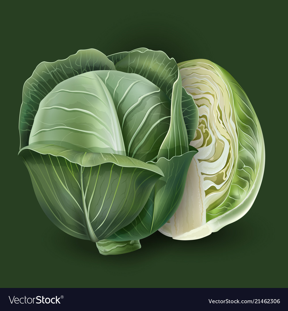 Cabbage on a green background