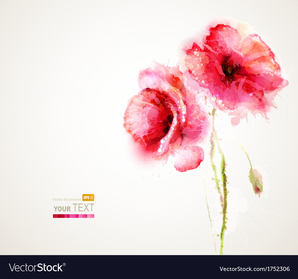 Two poppies vector image