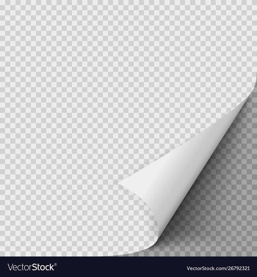 Curled corner paper empty sheet paper