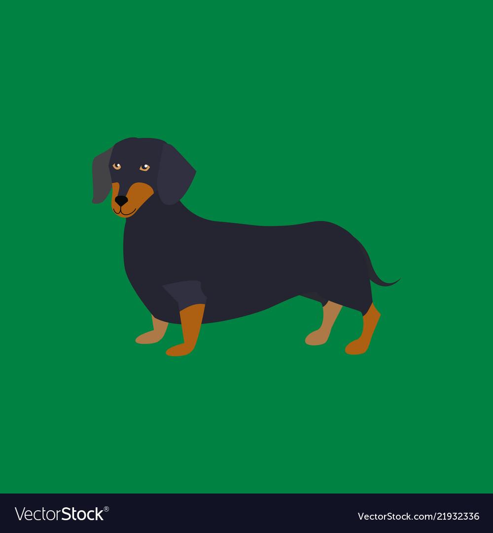 Cartoon funny dachshund breed of dog