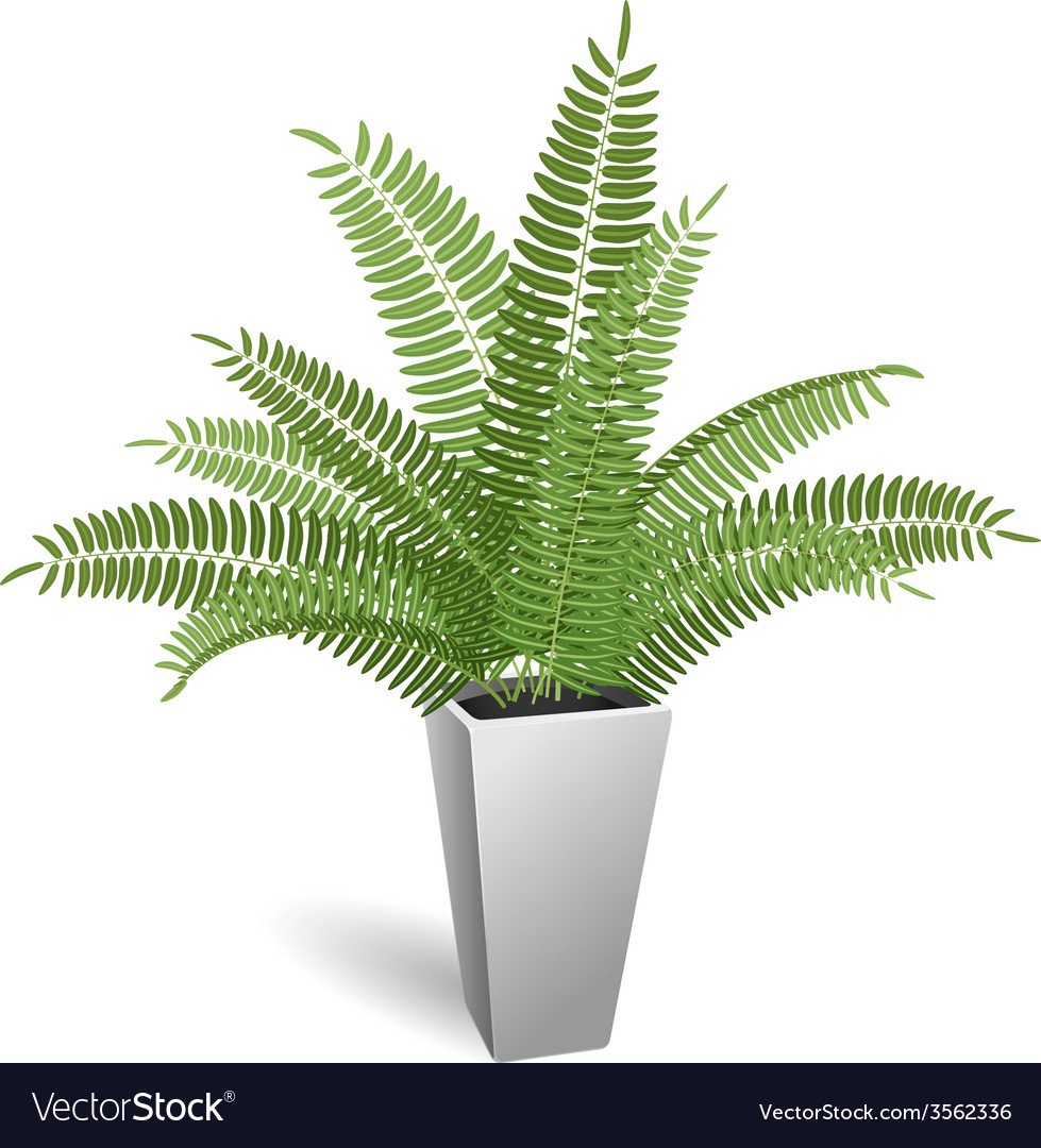 Ornamental Plant Fern In A Pot Royalty Free Vector Image