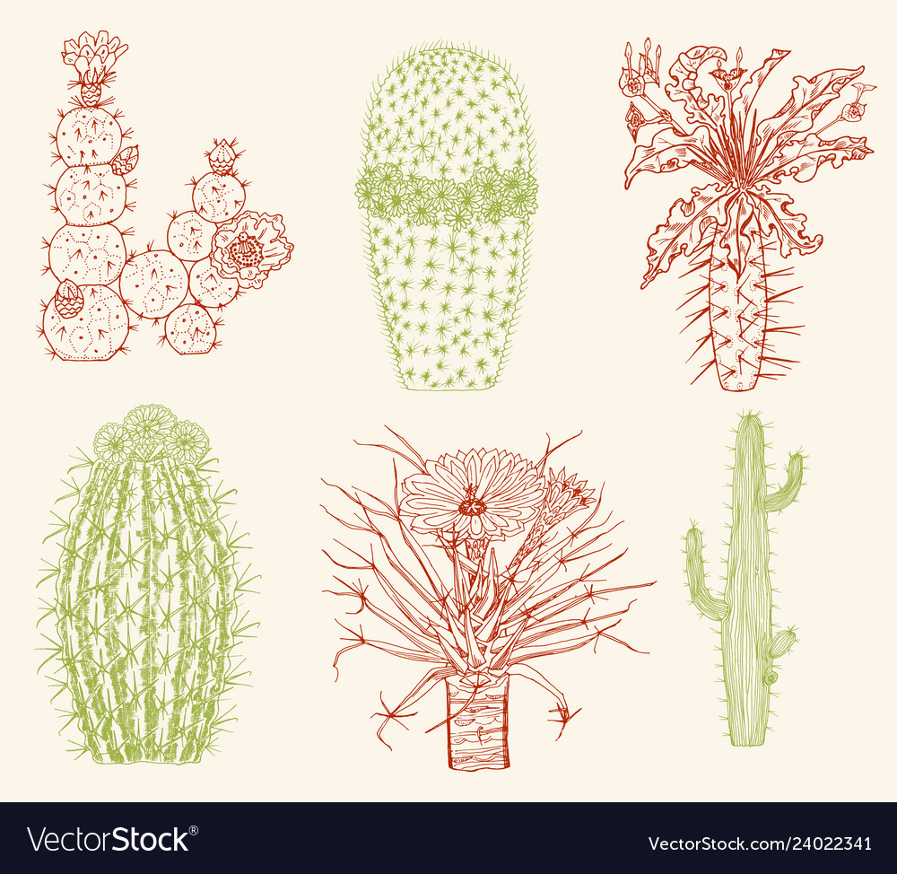 Home cactus plants and flowers set of cozy cute