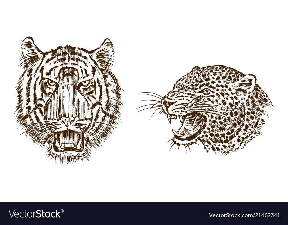 japanese wild tiger and animal leopard asian wild vector