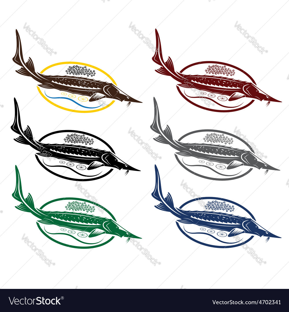 Sturgeon fish with caviar and lemon on plate vector