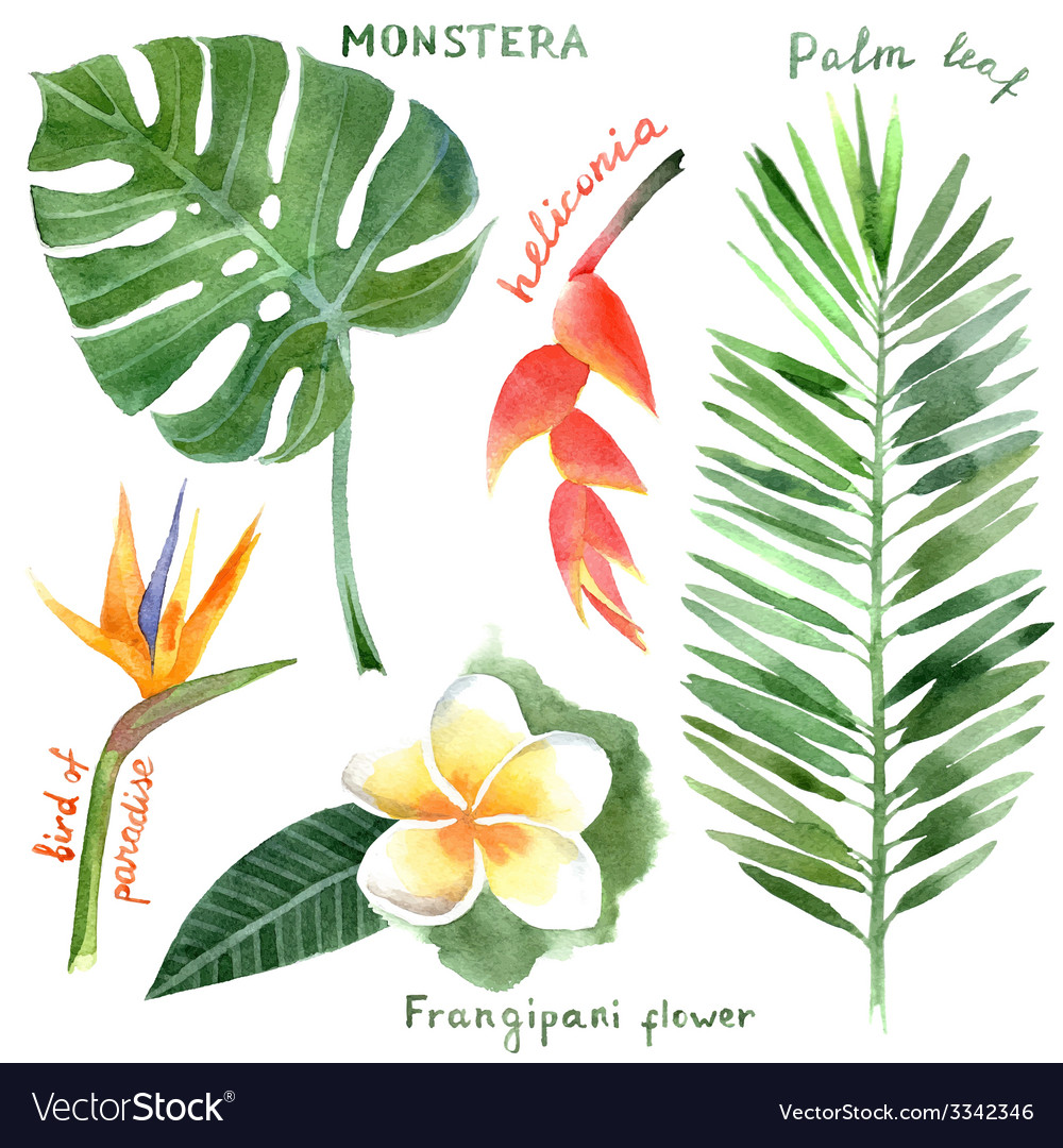 Watercolor Tropical Plants Royalty Free Vector Image