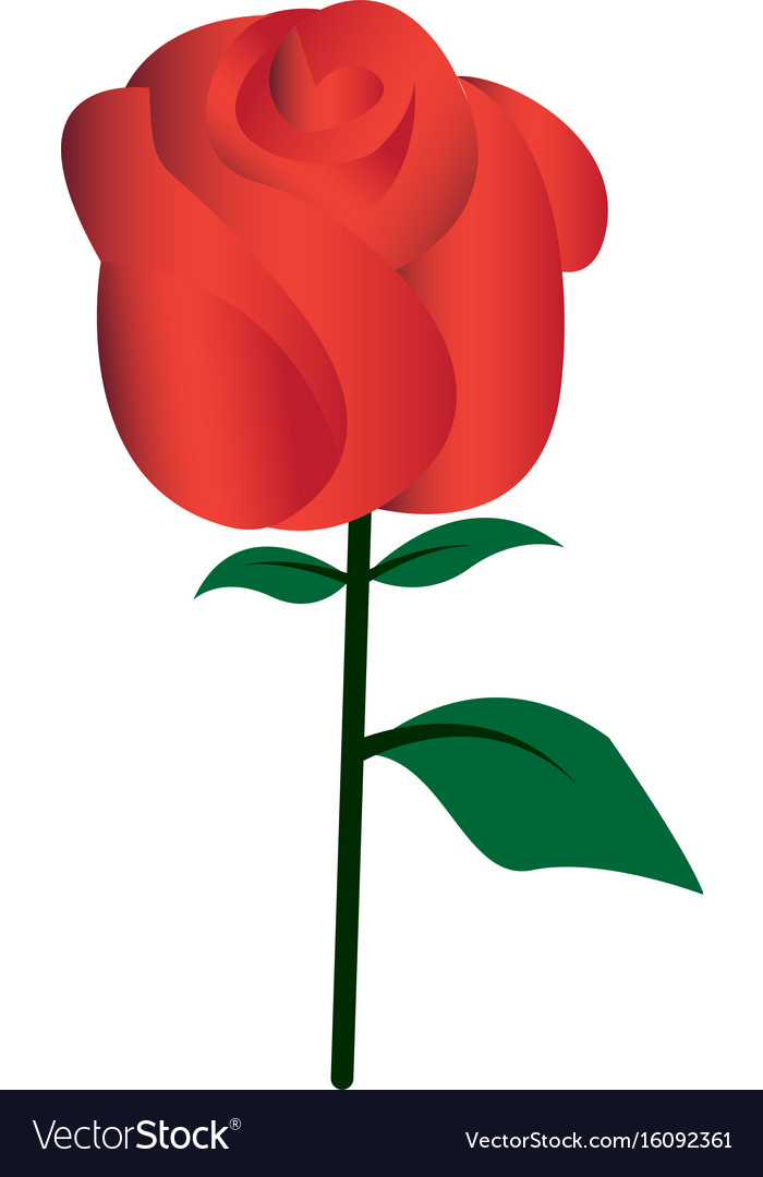 Flat color rose icon vector image