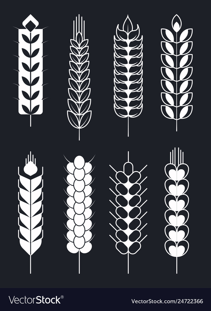 Ear of wheat isolated icons monochrome sketch