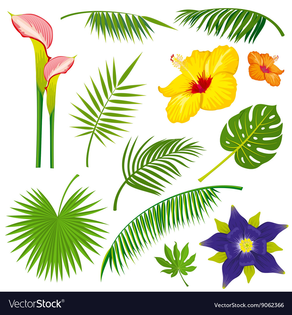 Tropical jungle leaves and flowers set