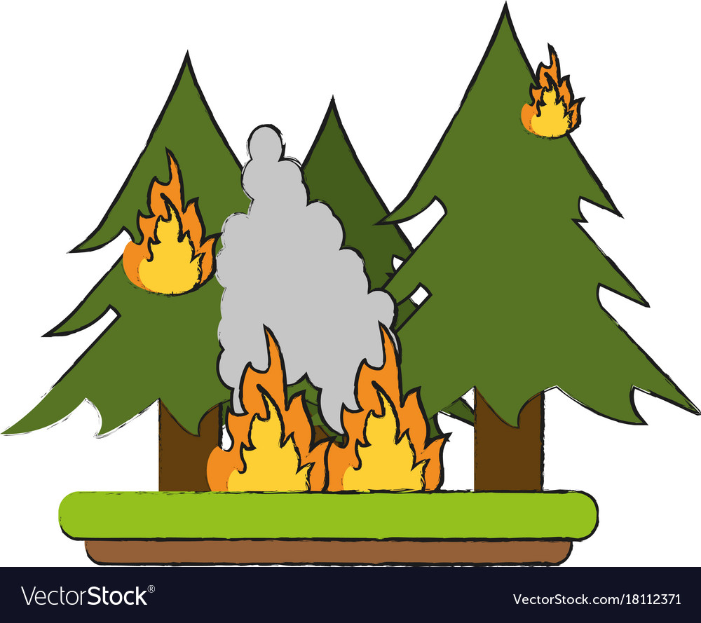 Forest in fire