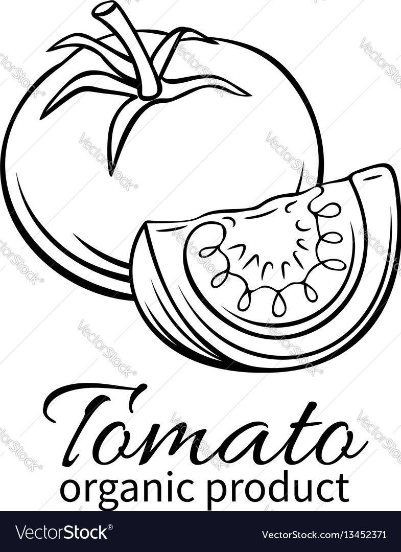 Hand drawn tomato icon
