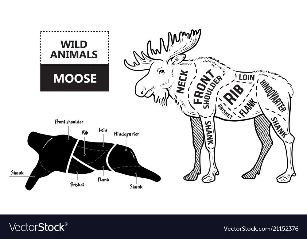 cut of elk set poster butcher diagram desert vector imageDiagram Of Moose Cuts #11