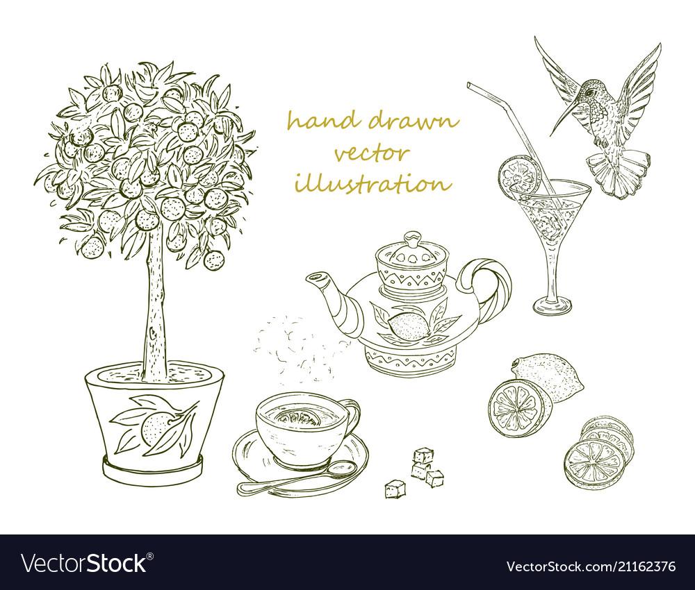 Hand drawn citrus elements set vector image