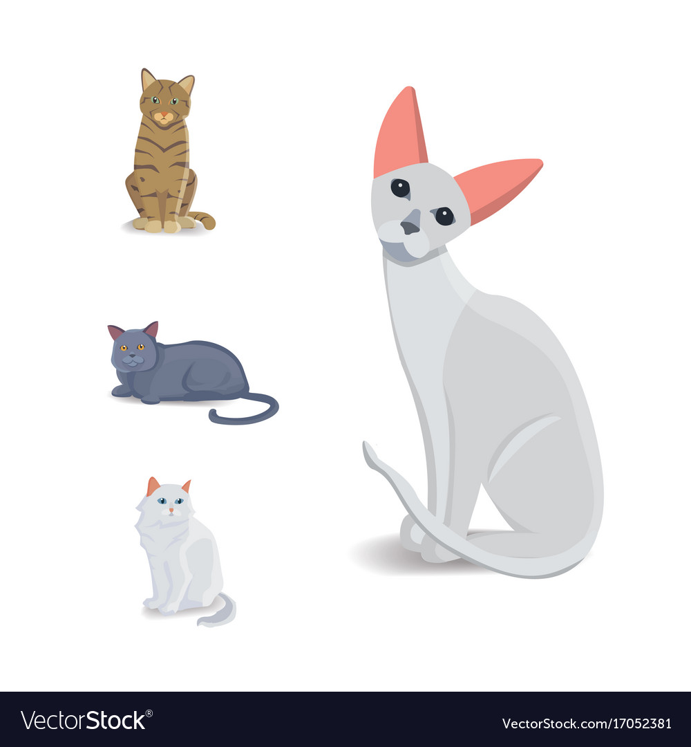 Collection cats of different breeds